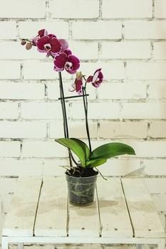 vaso e terriccio per orchidea